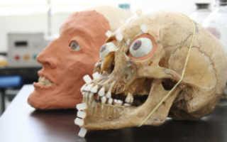 Что такое одонтоглифика зубов, одонтологические признаки в антропологии