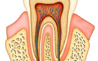 Почему после лечения болит и ноет зуб (после пломбирования, удаления нерва или зуба)