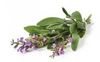 Как заваривать шалфей при воспалении десен, травы для полоскания полости рта